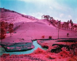 richard-mosse-infra chicquero
