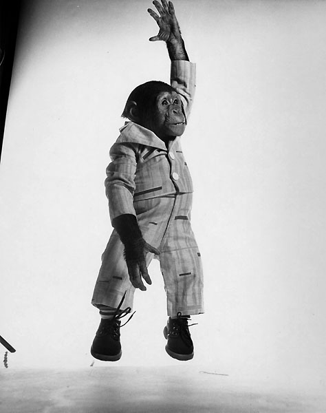 Jump 1959 by Philippe Halsman Chimp
