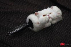 Advertisment marketing branding - chicquero - 3m lint roller