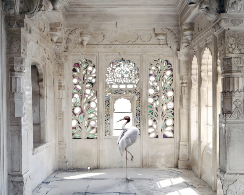 Karen Knorr photography - Animals  A-Place-like-Amravati-Udaipur-City-Palace-Udaipur