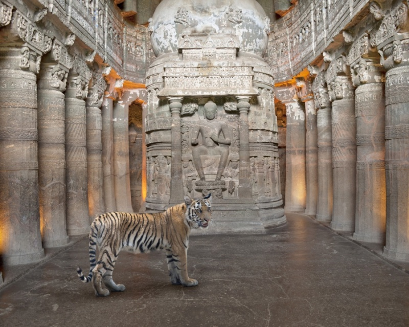 Karen Knorr photography - Animals - A-Soul-Reborn-Ajanta-caves-Ajanta