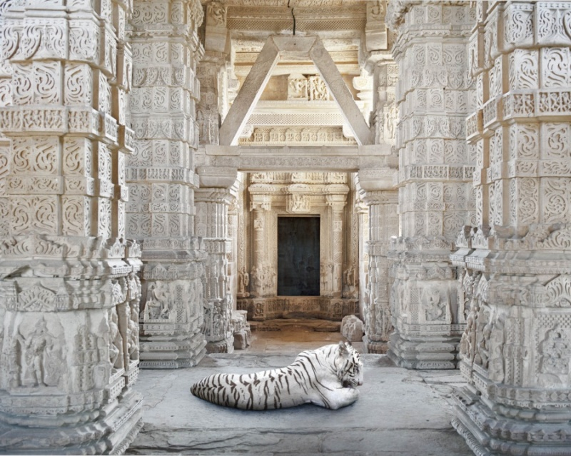 Karen Knorr photography - Animals  Becoming-Arihanta-Sahastrabahu-Temple-Gwalior