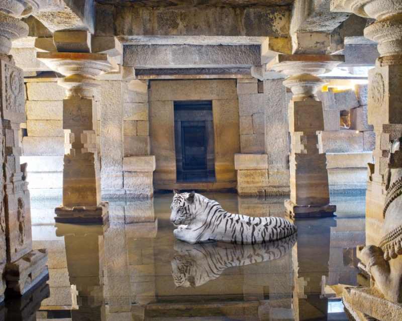 Karen Knorr photography - Animals Chicquero - Bhakti-Path-of-Sants-Shiva-Temple-Hampi