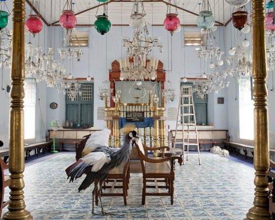 Karen Knorr photography - Animals Chicquero - exodus bird