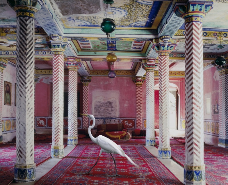 Karen Knorr photography - Animals Chicquero - Flight-to-Freedom-Juna-Mahal-Dungarpur