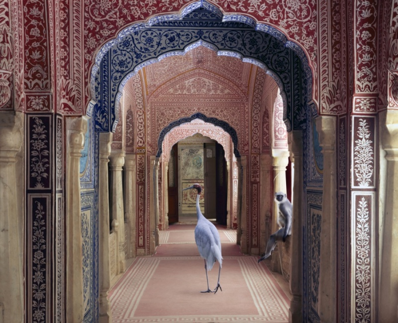Karen Knorr photography - Animals Chicquero - The-Avatars-of-Devi-Samode-Palace-Samode