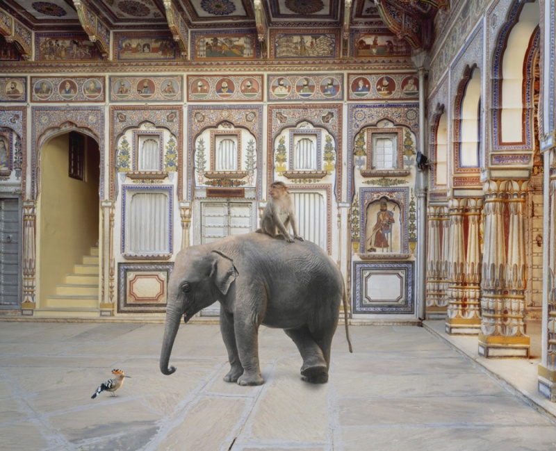 Karen Knorr photography - Animals Chicquero - The-Conqueror-of-the-World-Podar-Haveli-Nawalgarh