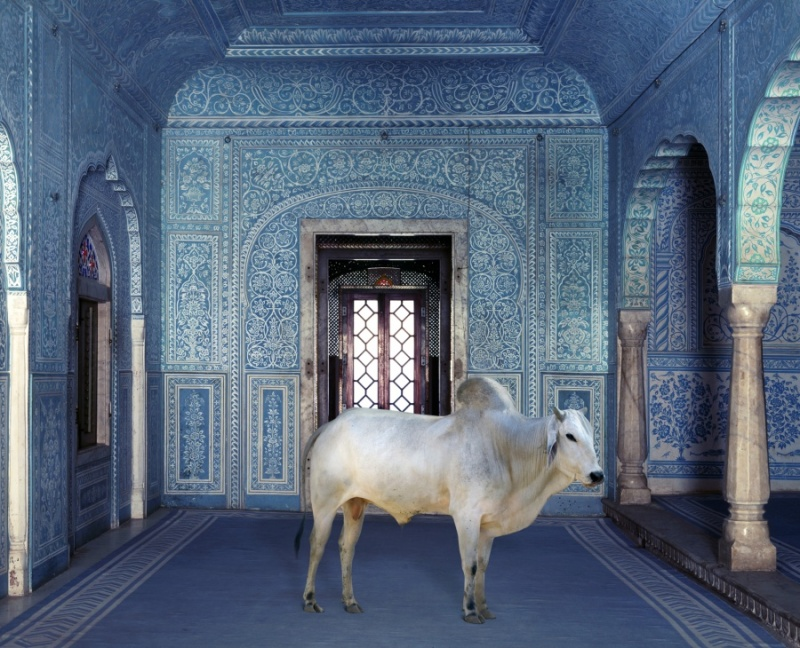 Karen Knorr photography - Animals Chicquero - The-Gatekeeper-Samode-Palace-Samode