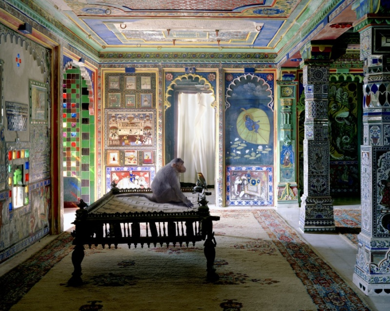 Karen Knorr photography - Animals Chicquero - The-Private-Audience-Aam-Khas-Juna-Mahal-Dungarpur
