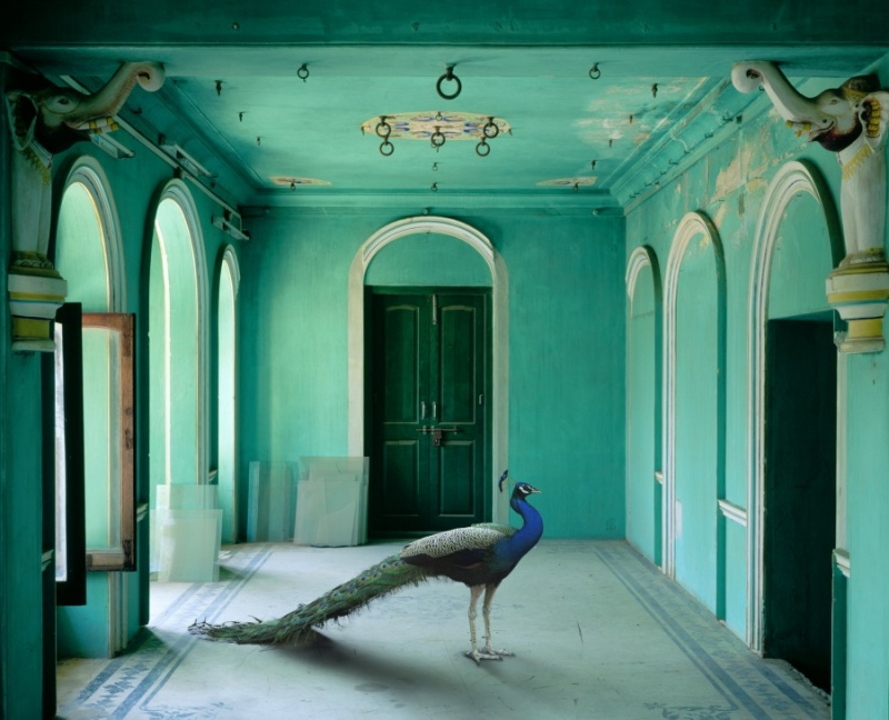 Karen Knorr photography - Animals Chicquero - The-Queens-Fort-Zenana-Udaipur-