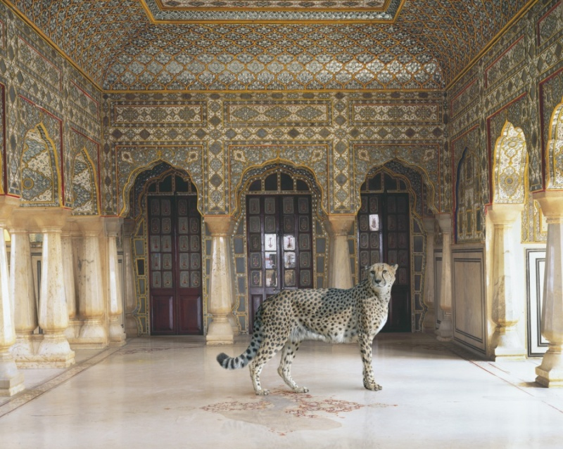 Karen Knorr photography - Animals Chicquero - The-Return-of-the-Hunter-Jaipur-Palace-Jaipur