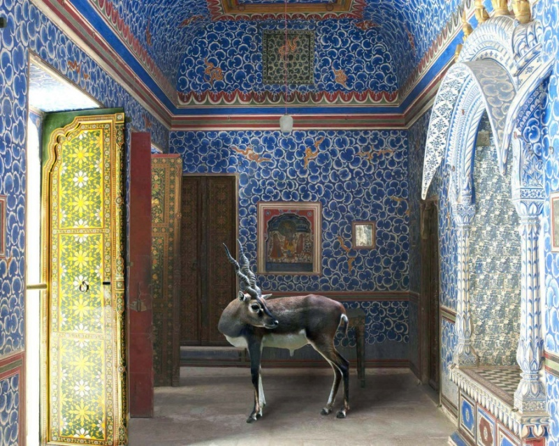 Karen Knorr photography - Animals Chicquero - The-Sound-of-Rain-Junagarh-Fort-Bikaner