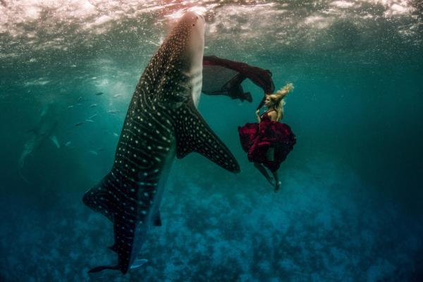 kristian schmidt underwater photography - shark whale - chicquero 01