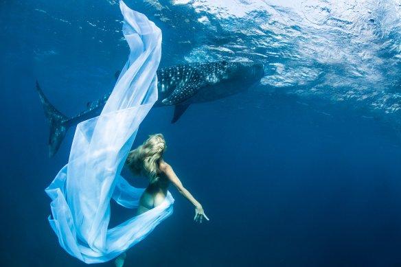 kristian schmidt underwater photography - shark whale - chicquero 02