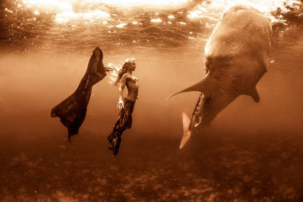 kristian schmidt underwater photography - shark whale - chicquero 03