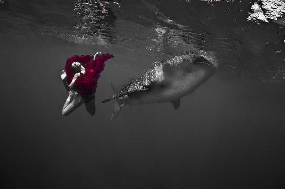 kristian schmidt underwater photography - shark whale - chicquero 04