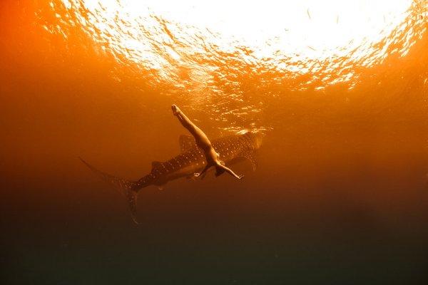 kristian schmidt underwater photography - shark whale - chicquero 05
