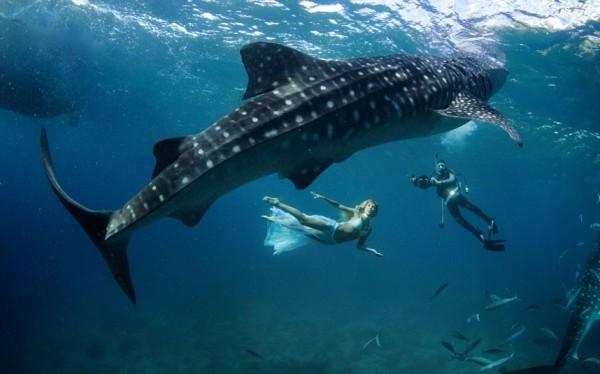 kristian schmidt underwater photography - shark whale - chicquero 07