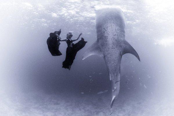 kristian schmidt underwater photography - shark whale - chicquero 14