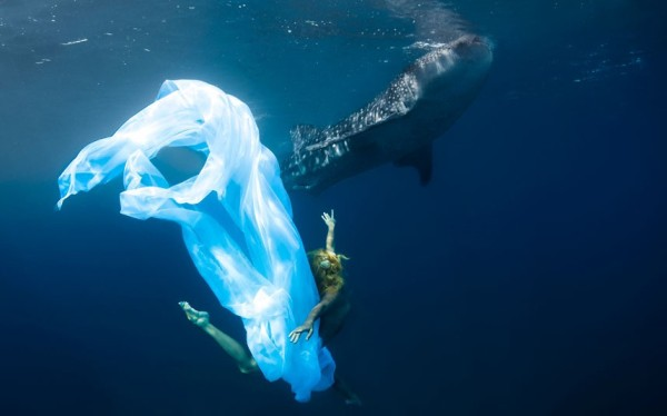 kristian schmidt underwater photography - shark whale - chicquero 17
