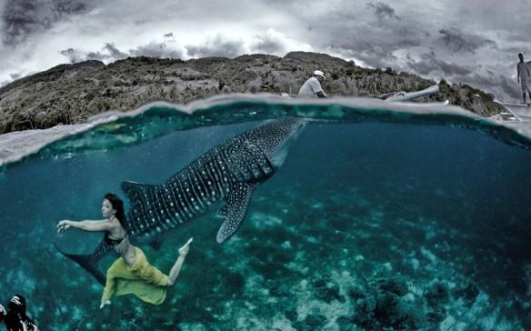 kristian schmidt underwater photography - shark whale - chicquero 19