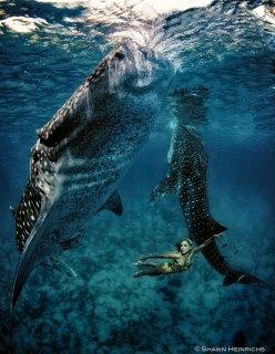 kristian schmidt underwater photography - shark whale - chicquero 24