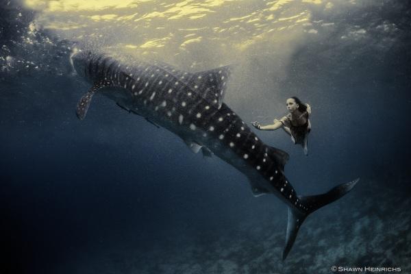kristian schmidt underwater photography - shark whale - chicquero 25