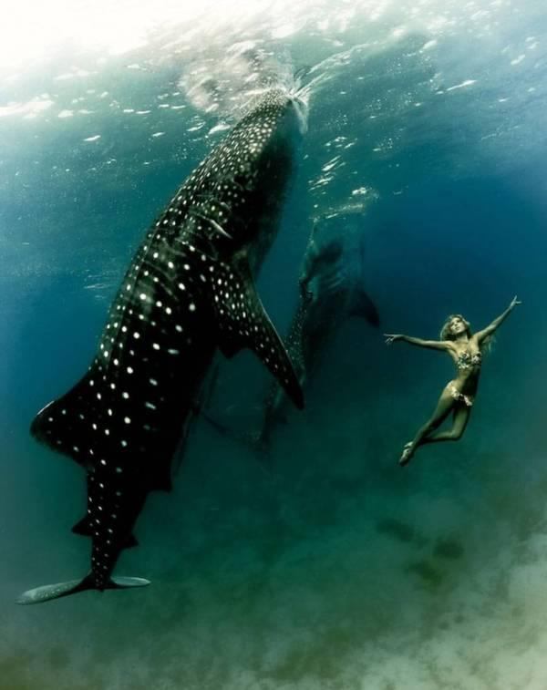 kristian schmidt underwater photography - shark whale - chicquero 27