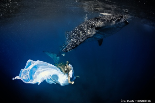 kristian schmidt underwater photography - shark whale - chicquero 28