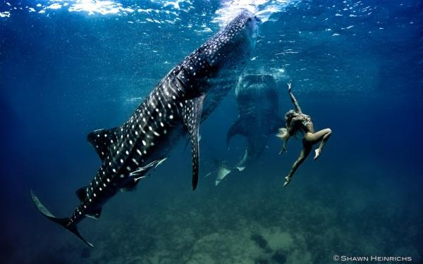 kristian schmidt underwater photography - shark whale - chicquero 30